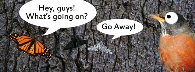 peppered moths copy